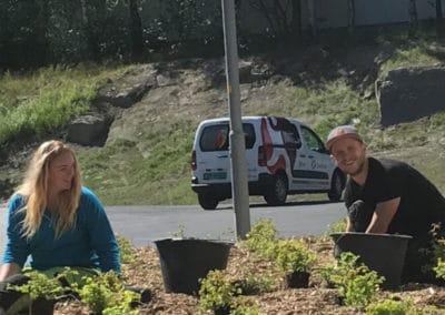 anleggsgartner-planting