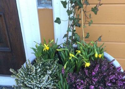 hagesenter-krukke-ferdigplantet-foran-dor