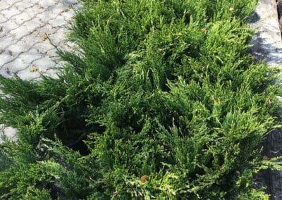 hagesenteret-busk
