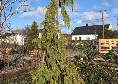 planteskolen-hengesypress