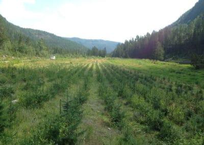 planteskolen-plantefelt-tovdal